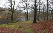Skoven og søerne året rundt